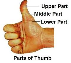 the g=thumb in palm reading